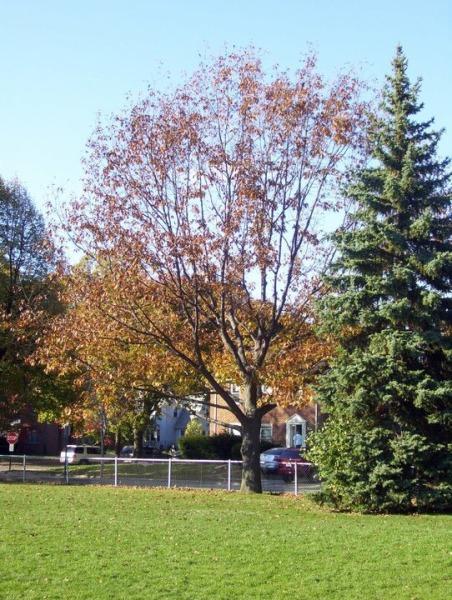 mfa-climbing-tree
