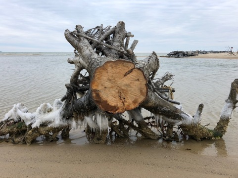 My husband and I spent December 31, in part, walking the frigid beach at the Northern Neck.
