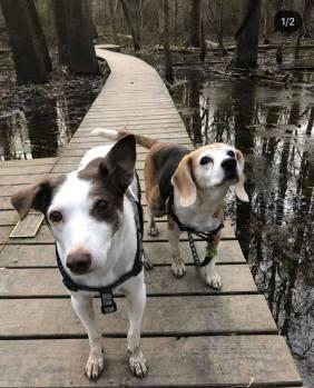 Jack and Sadie at the Wetlands at Pony Pasture