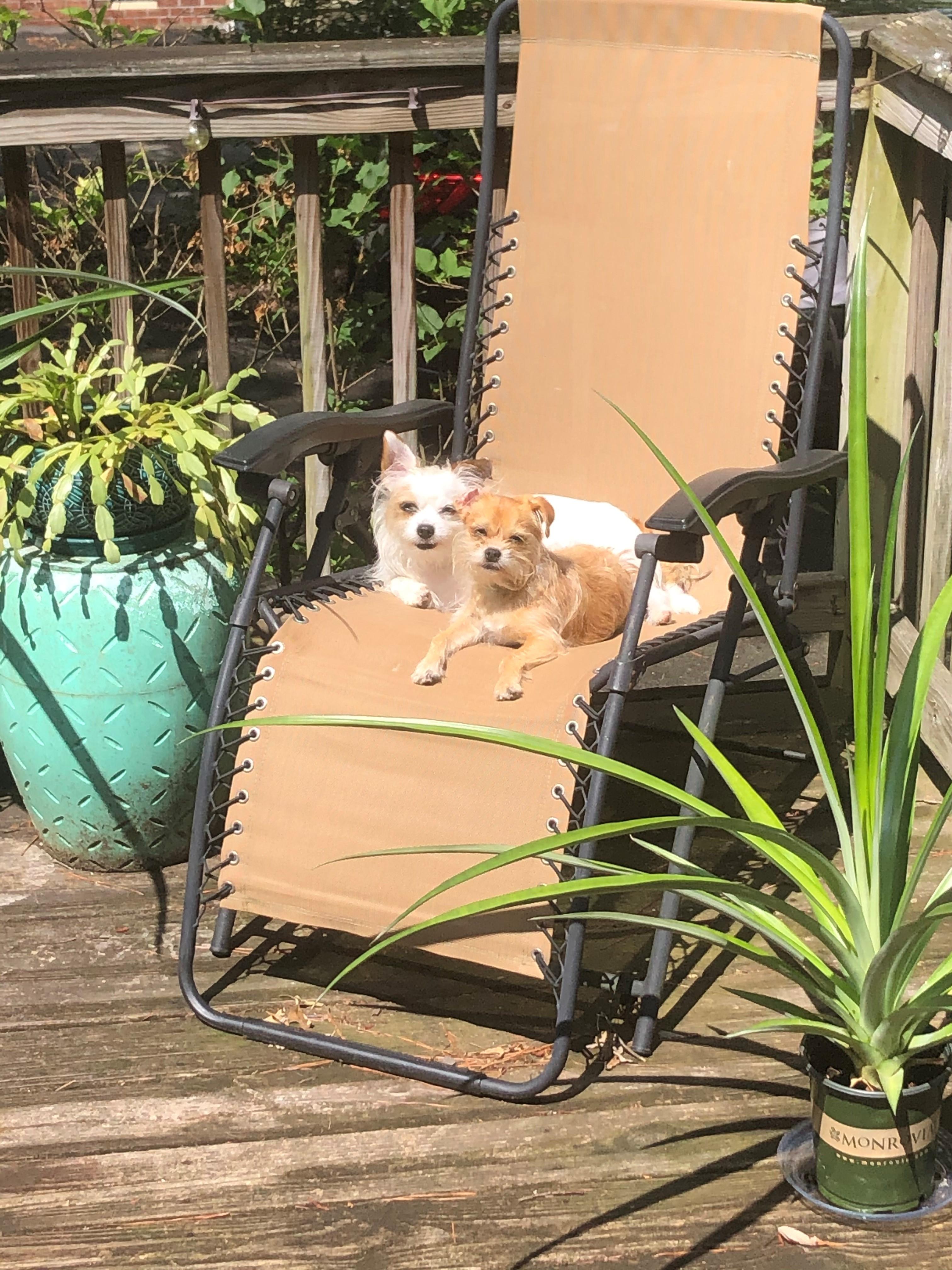 Littles in the sun