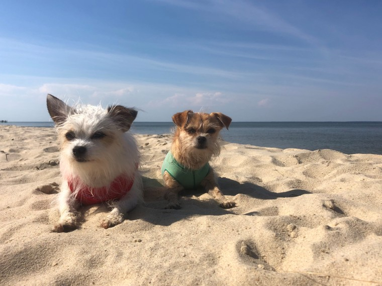 Joy Littles on the beach BQS