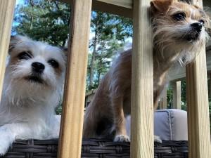 Joy Littles on the deck